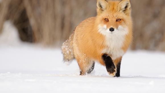 Охота во Владимирской области - Бавленское охотничье хозяйство