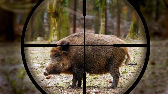 Охота во Владимирской области - «Фетининское» охотничье хозяйство